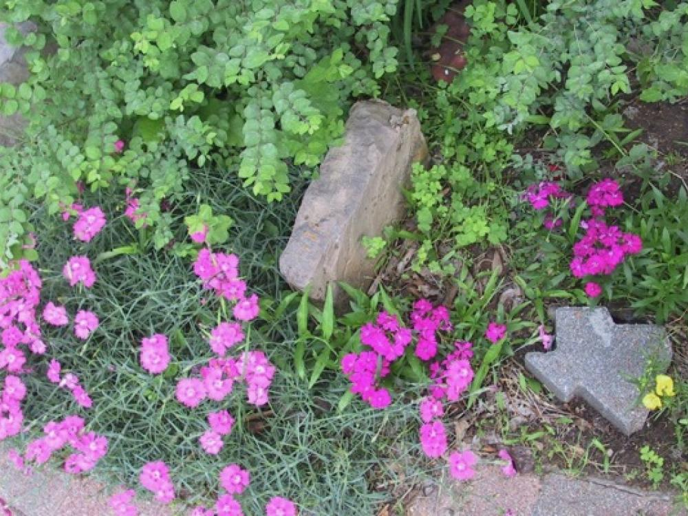 Incroyable North Texas Gardening Tips To Be Shared With Nonnative Residents