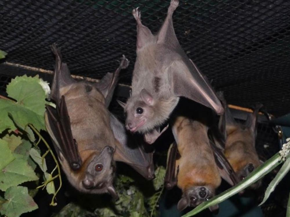 North Texas Wild Bats Hang At Parker County Sanctuary While They Heal