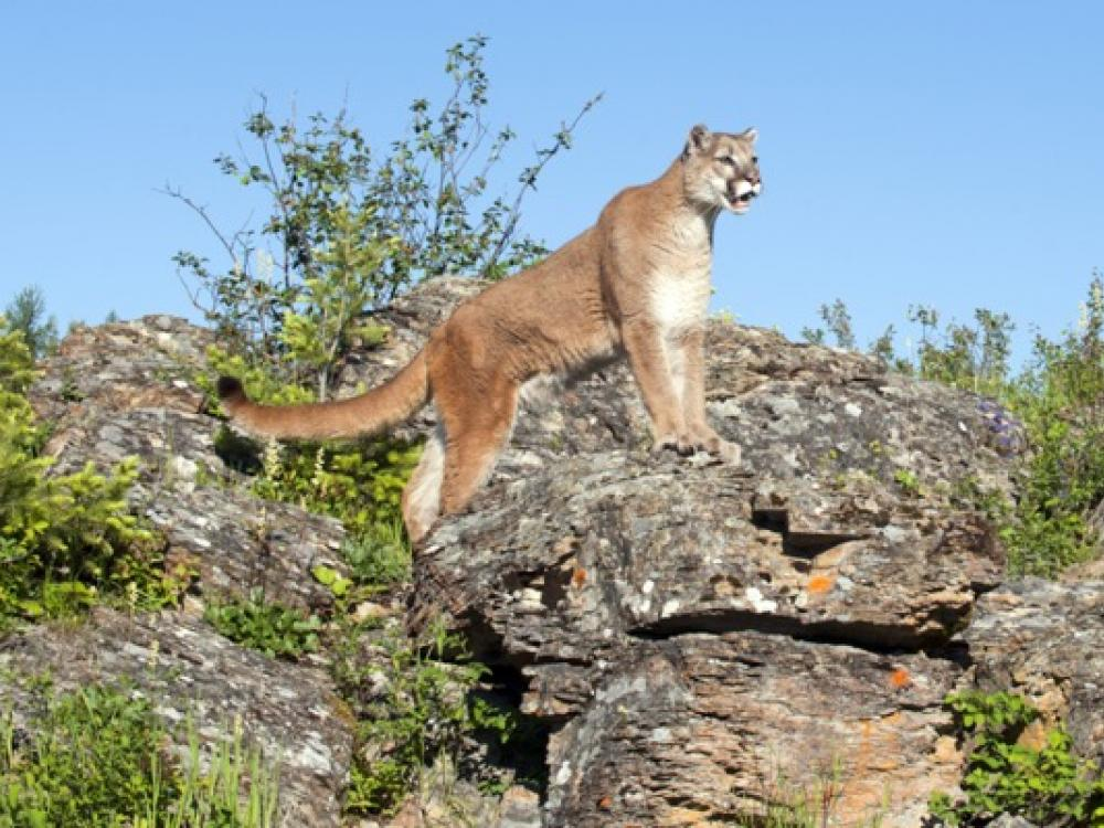 cougar dating dfw upoznavanje s trčanjem muškarca