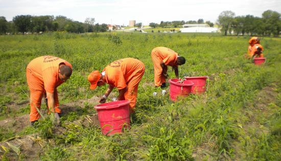 Prisoners gardening