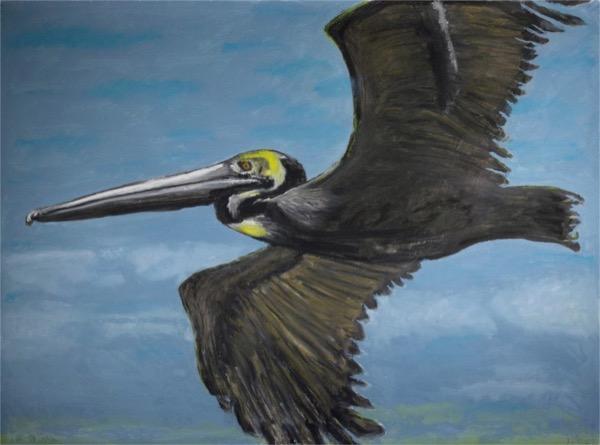 Frank X Tolbert's Pelican